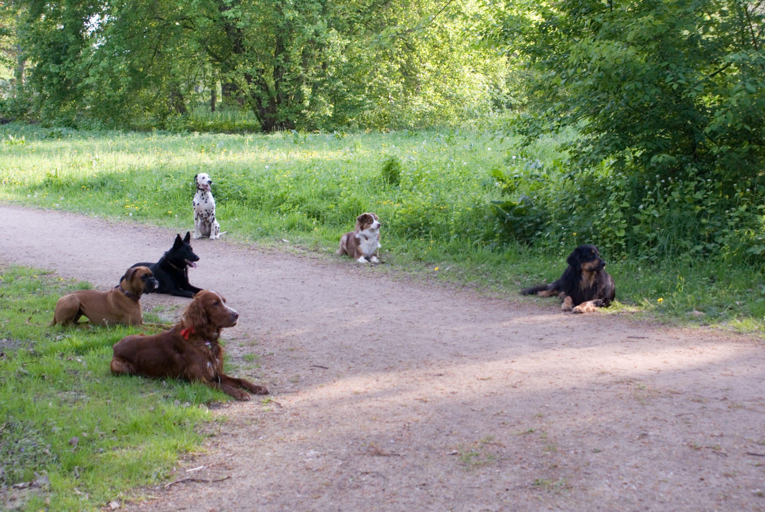 TEAMTRAINING-BREMEN.DE 2009 04 27 Hundeschule 42 scaled 1
