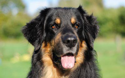 Hundeschule Teamtraining Bremen Sachkundebescheinigung