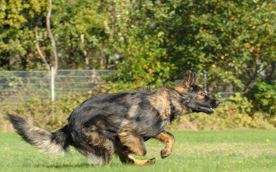 Hundeschule Teamtraining Bremen Achterdiek Anfahrt