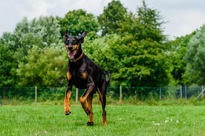 Hundeschule Teamtraining Bremen Achterdiek Trainingsangebot