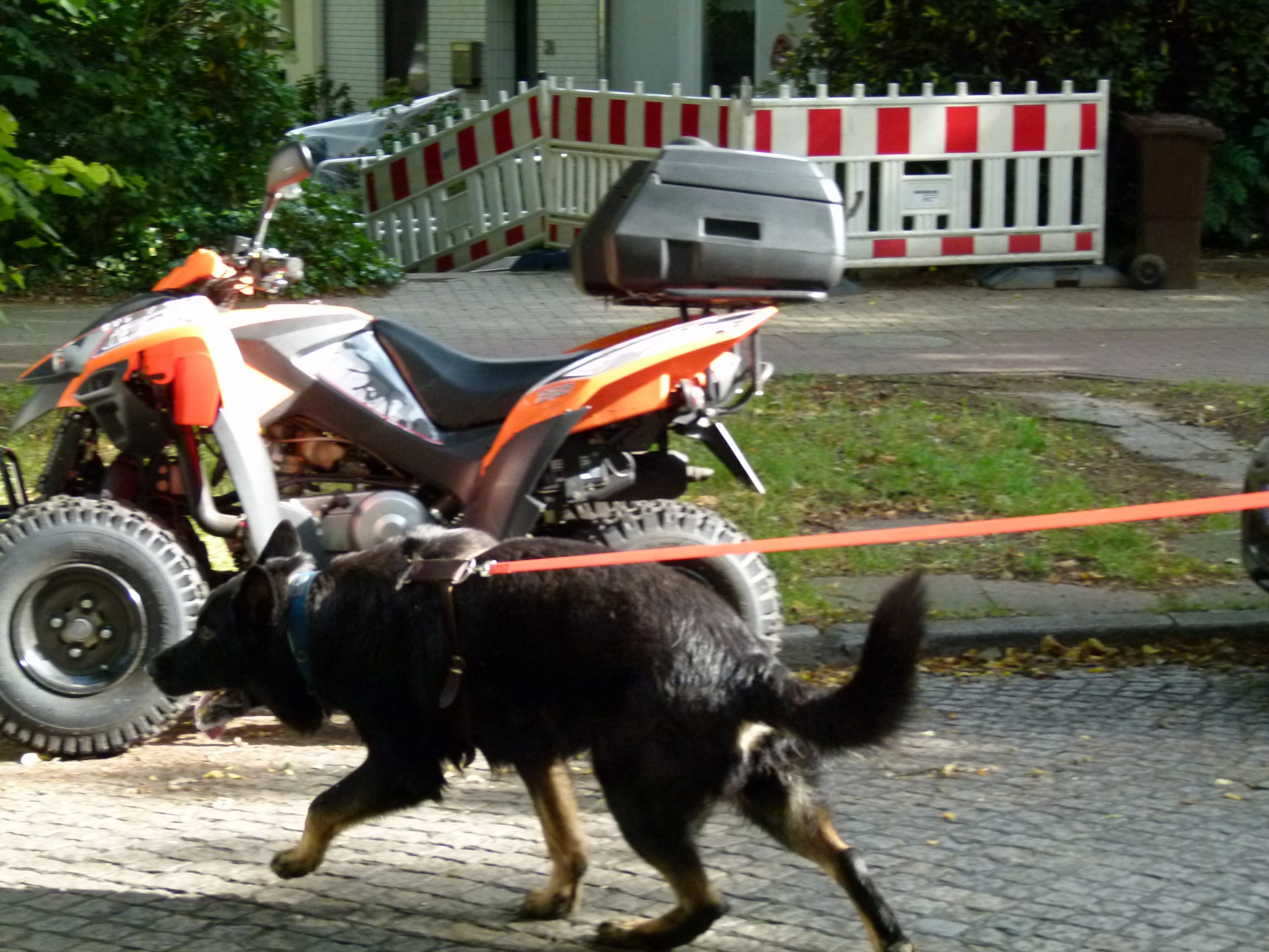 Wagen - Hund