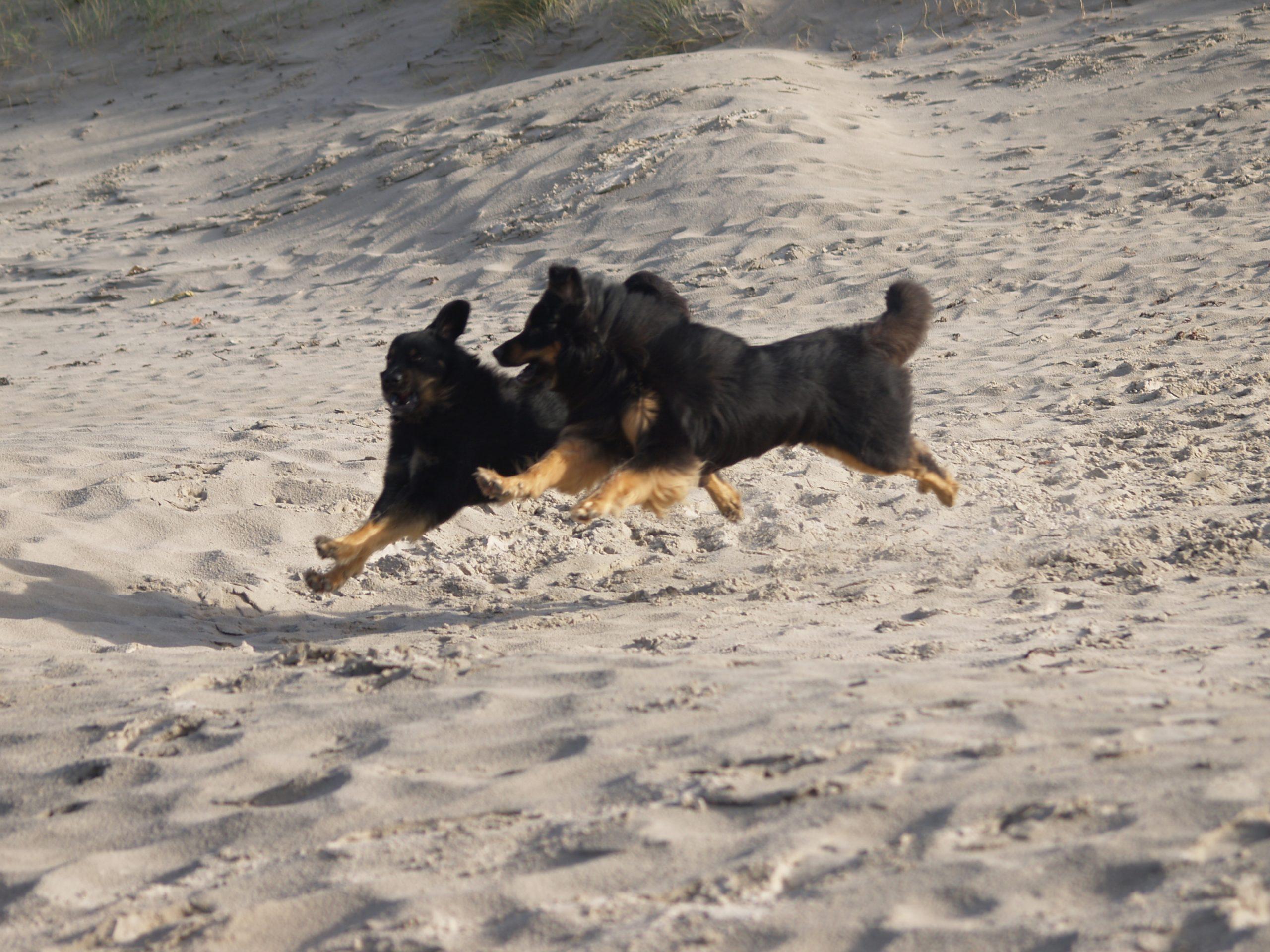 Hund - Hunderasse
